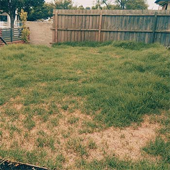 Grass cutting services south morang